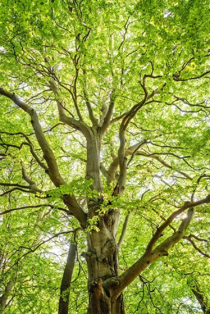 Bäume (59)